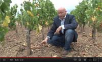 Bordeaux Revisited Episode 7